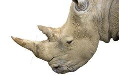 Rhino Head Stock Photos
