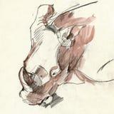 Rhino head, drawing Stock Image