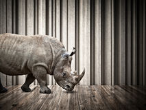 Rhino in the house Royalty Free Stock Photography