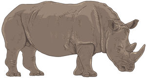 Rhino Illustration Royalty Free Stock Photos