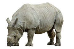 Rhino Isolated Stock Photography