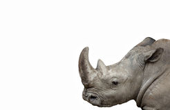 Rhino isolated Stock Image