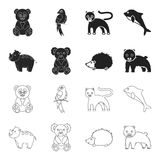 Rhino, koala, panther, hedgehog.Animal set collection icons in black,outline style vector symbol stock illustration web. Rhino, koala, panther, hedgehog.Animal vector illustration