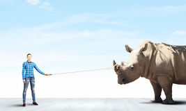 Rhino on lead Royalty Free Stock Photography