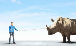 Rhino on lead Stock Photography
