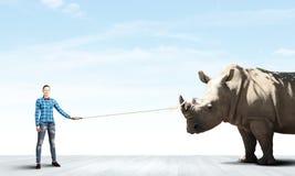 Rhino on lead Stock Photography
