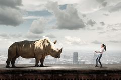 Rhino on lead. Young woman in casual holding rhino on lead Royalty Free Stock Photo