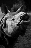 Rhino portrait Stock Photos