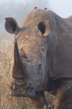 Rhino Portrait 2 royalty free stock photos