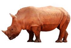 Rhino rhinoceros. A rhino rhinoceros in white background Stock Image