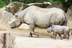 Rhino rhinoceros animal baby  zoo Royalty Free Stock Photos