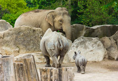 Rhino rhinoceros baby elephant  zoo animals Royalty Free Stock Photo