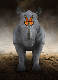 Rhino, Rhinoceros , Monarch Butterfly, Desolate Desert Stock Photo