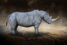 Rhino, Rhinoceros , Monarch Butterfly, Desolate Desert Stock Images