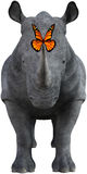 Rhino, Rhinoceros , Monarch Butterfly, Isolated Stock Image