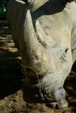 Rhino horn. Rhino`s horn is a Rhino`s life royalty free stock photo