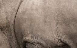 Rhino skin macro background Royalty Free Stock Photos