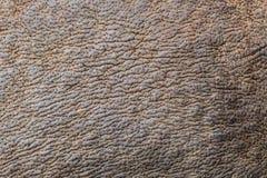 Rhino skin Stock Images