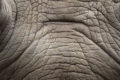Rhino skin texture. Stock Photography
