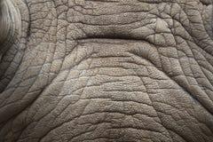 Rhino skin texture. Stock Photography
