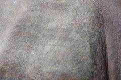 Rhino skin Stock Photo