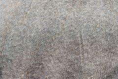 Rhino skin texture Royalty Free Stock Image