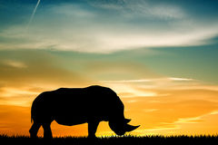Rhino at sunset Stock Photos