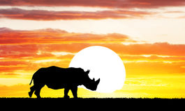 Rhino at sunset Royalty Free Stock Images