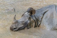 Rhino Taking A Mud Bath Royalty Free Stock Photos