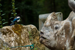 Rhino talking to bird Royalty Free Stock Images