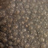 Rhino texture. Rough textured rhino skin close up stock photography