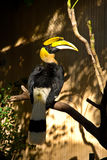Rhino Toucan Stock Images