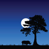 Rhino under the tree and moon Stock Images