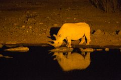 Rhino at the water at night Royalty Free Stock Image