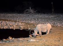 Rhino at waterhole Stock Image