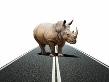 Rhino way Stock Image