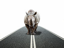 Rhino way Stock Photos