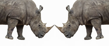 Rhino on a white background Stock Images