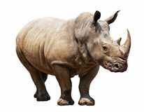 Rhino on white background stock images