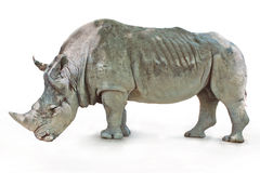 Rhino on white background Stock Photos