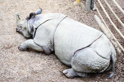 Rhino. A white rhino in a zoo in a sunny day Stock Images