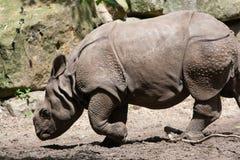 Rhino in zoo Stock Image