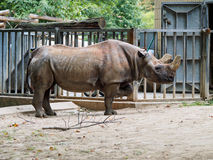 Rhino in zoo. A Rhino in a zoo Stock Photography