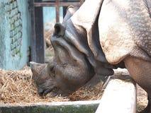 Rhino in the zoo Royalty Free Stock Photo