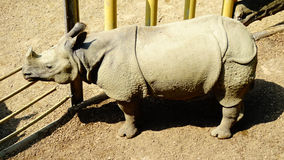 Rhino in the zoo. A rhino standing calm in the garden of the zoo Royalty Free Stock Images