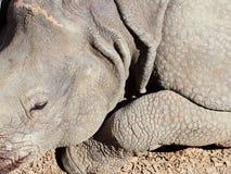 Rhino at the zoo, Vienna, Austria.  Royalty Free Stock Photography