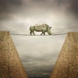 Rhinocéros équilibré sur la ligne Image stock