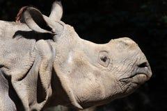 Rhinocéros Photo stock