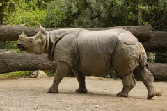 Rhinocéros Images libres de droits