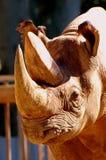 Rhinocéros   Images stock